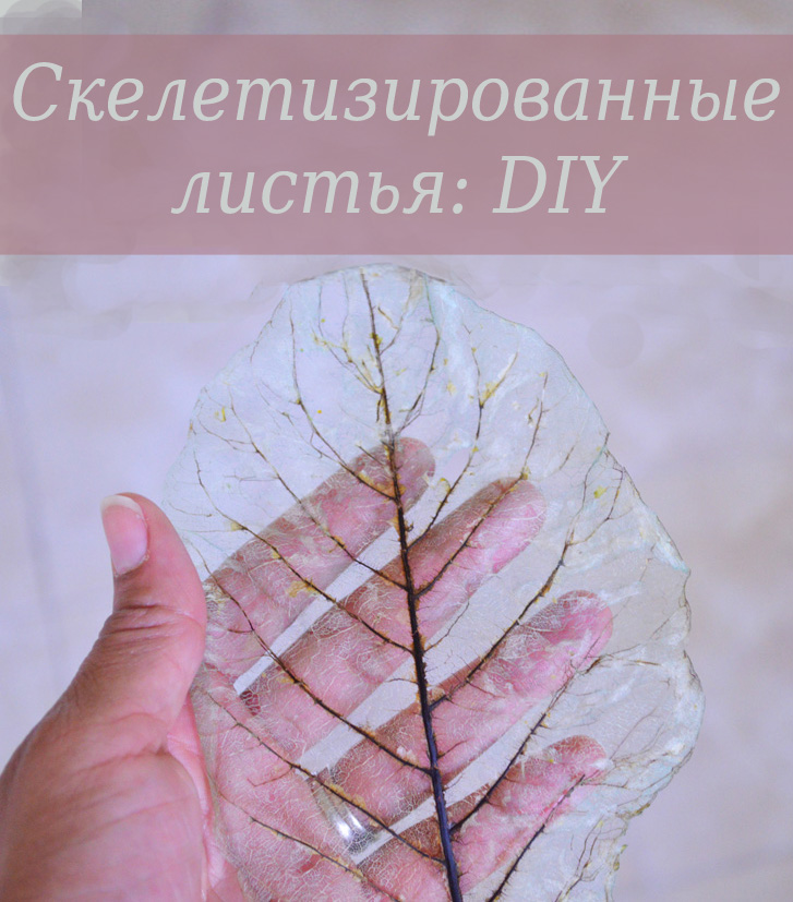 DIY skeleton leaves